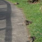 19042010-Squirrels